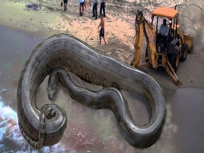 These Massive Animals Are Real and Terrifying